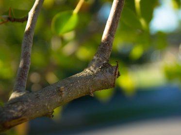 Imagen de la noticia ¿Podamos los árboles del jardín?