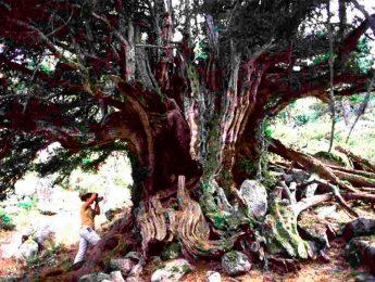 """Imagen de la noticia """"Reyes del Bosque"""", exposición fotográfica"""
