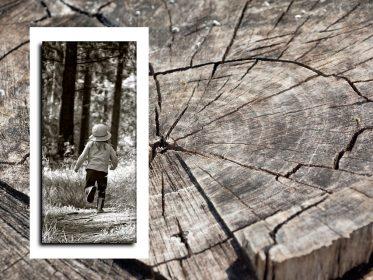 """Imagen de la noticia """"Los árboles y los sentidos"""", taller infantil"""