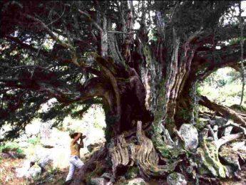 Imagen de la noticia Exposición: Reyes del Bosque