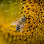 Imagen de la noticia Abejas y apicultura, una respuesta sostenible