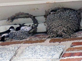 Imagen de la noticia Observación de las aves urbanas