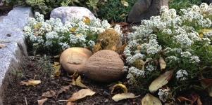 Imagen de la noticia Curso de jardinería ecológica