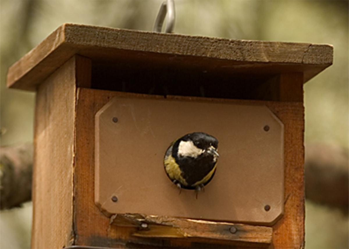 Imagen de la noticia Construcción de cajas nido para aves
