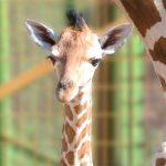 Imagen de la noticia Salida a Safari Madrid