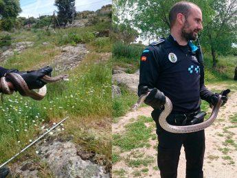 Imagen de la noticia Encontrada una serpiente de escalera