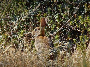 Imagen de la noticia El domingo se abre el período de caza