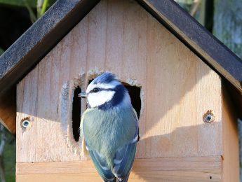 Imagen de la noticia Taller de aves