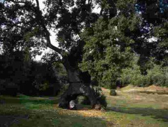 Imagen de la noticia Taller «Los árboles y sus sentidos»