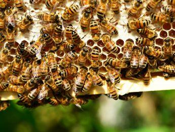 Imagen de la noticia Taller infantil «Las abejas»