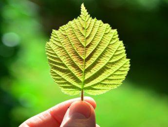 Imagen de la noticia Bibliotaller de la Naturaleza «El DNI de las plantas»