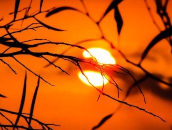Imagen de la noticia Activado el nivel de alto riesgo por ola de calor