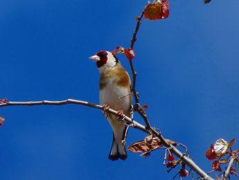 Imagen de la noticia Curso de iniciación a la ornitología