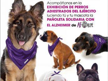 Imagen de la noticia Exhibición canina en favor del AFALPE
