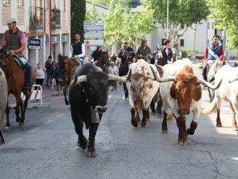 Imagen de la noticia Encierro de la trashumancia y suelta de vaquillas