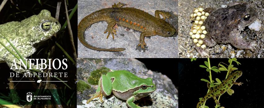 Imagen de la noticia Presentación de la Guía de Anfibios. Día Mundial de los Humedales