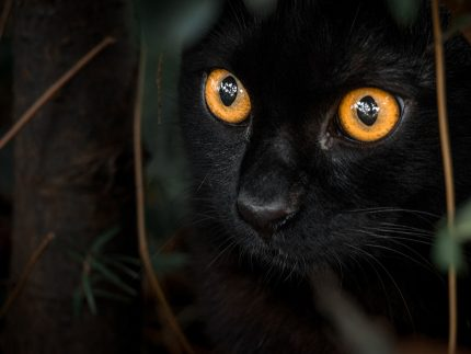 Imagen de la noticia Curso de cuidador de colonias felinas
