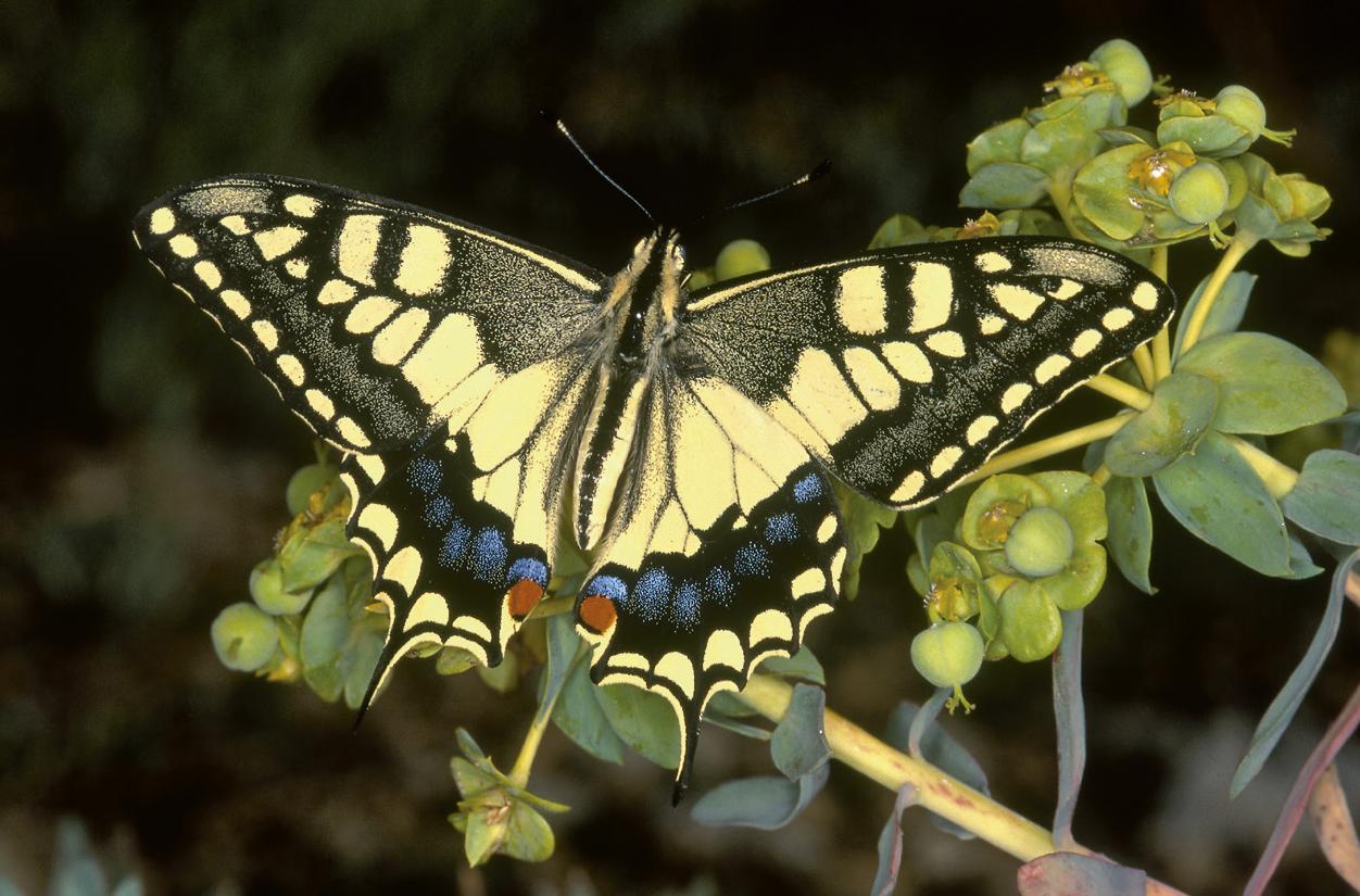 Imagen de la noticia Mariposas de Alpedrete