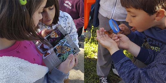 Imagen de la noticia Observatorio privilegiado de mariposas diurnas. En Alpedrete hay 67 especies de mariposa