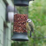 Imagen de la noticia Taller de elaboración de comederos para aves