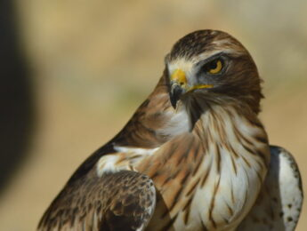 Imagen de la noticia «Emplumados»: observación de aves en Alpedrete