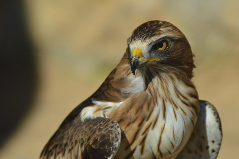 Imagen de la noticia «Emplumados»: este fin de semana, observación de aves en Alpedrete